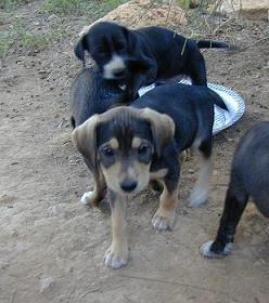 Cachorritos, tamaño pequeño (Valencia) Post410