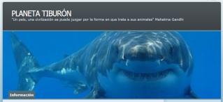 Blog PLANETA TIBURON