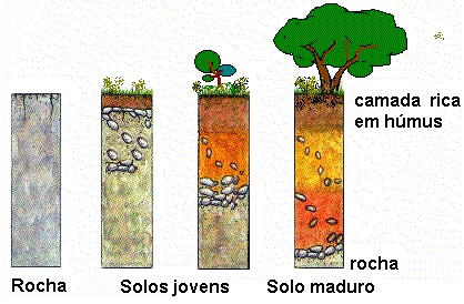 Solos: Gênese e Estrutura Solo_b10