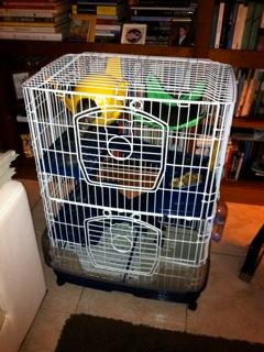 votre avis sur cette cage Img_0211