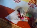 raton et mousse attendent un heureux évènement ! P1050113