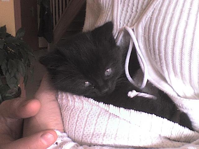Spécials Photos : Avant/Après de nos chats Blacky13
