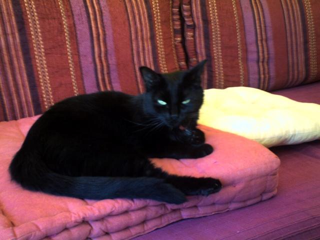 Spécials Photos : Avant/Après de nos chats Blacky14