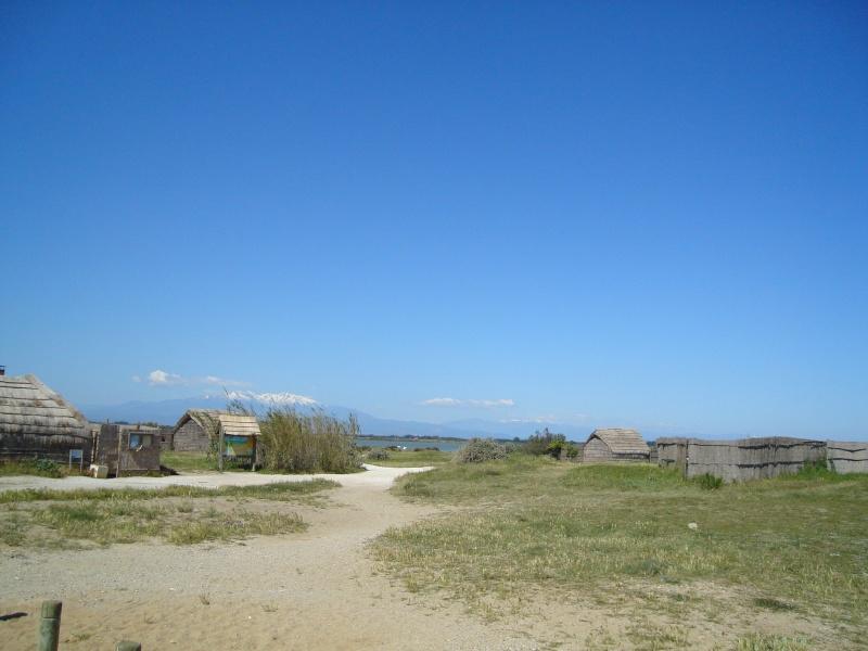 Etang de Canet en Roussillon Dsc00510