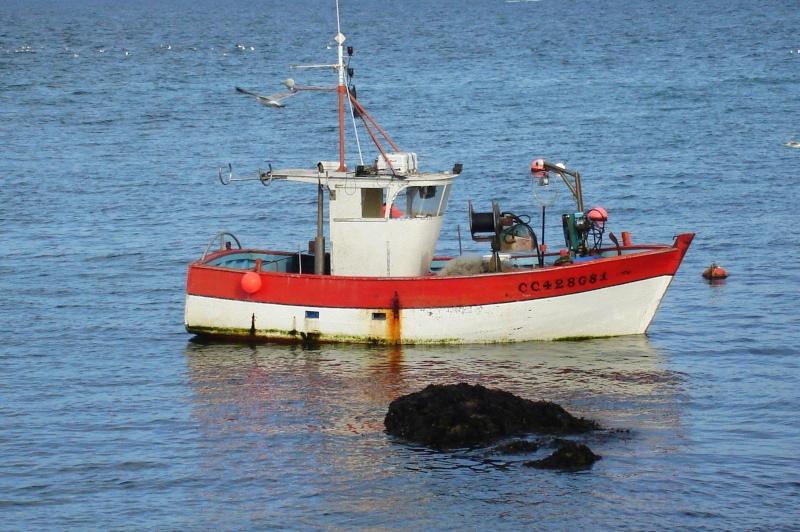 Crustacés de la Pointe de Trévignon Dsc05610