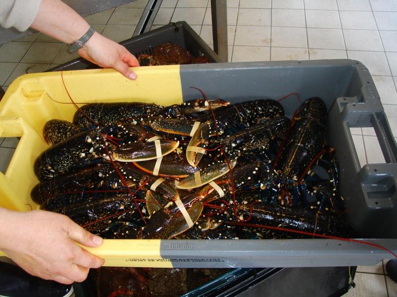 Crustacés de la Pointe de Trévignon Dsc05611
