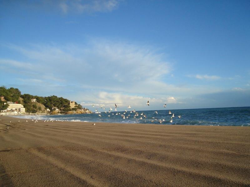 Lloret de Mar ( Espagne ) Dsc07010