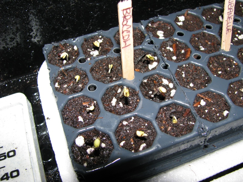 Seed Starting Time in Canada Growing Zone 4a in Ontario 00111