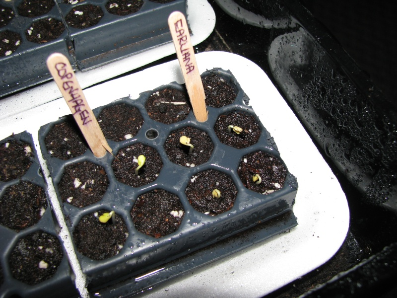 Seed Starting Time in Canada Growing Zone 4a in Ontario 00211