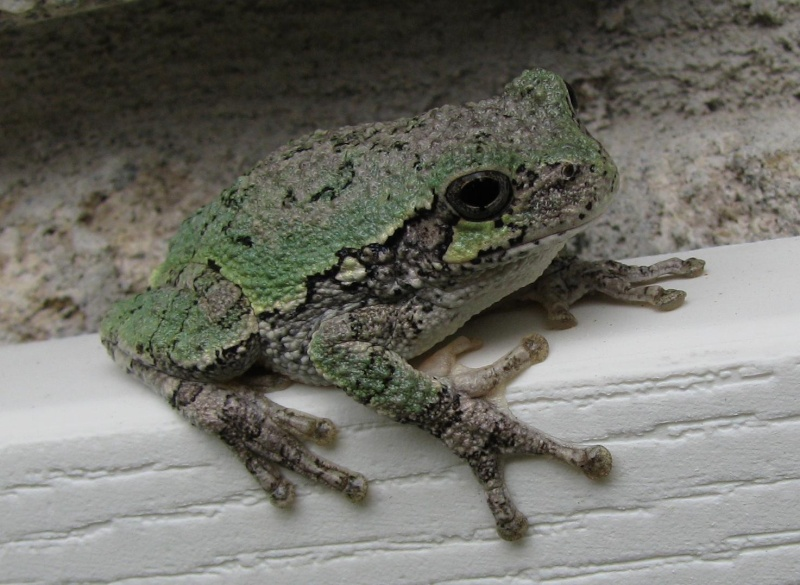 FROGS? 006_sm10