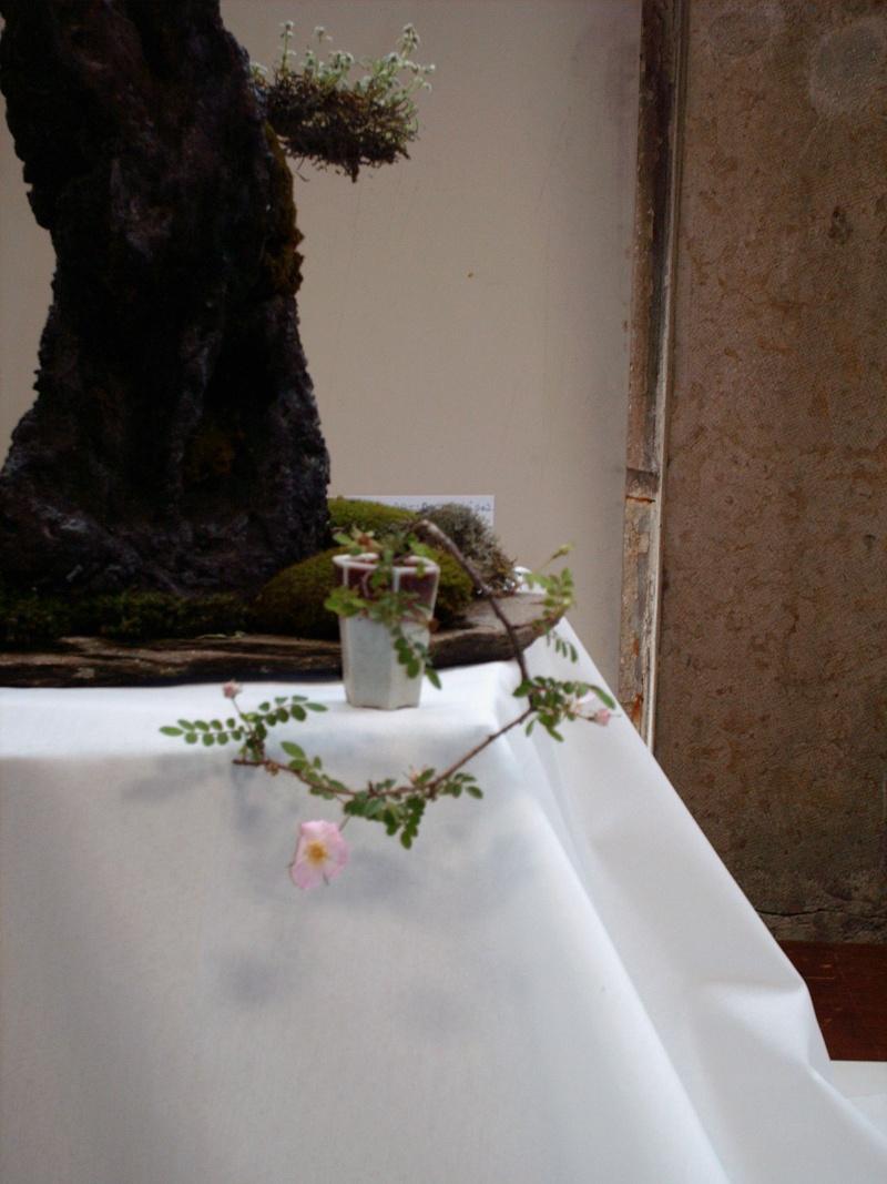 Rosier en bonsaï Hpim2010