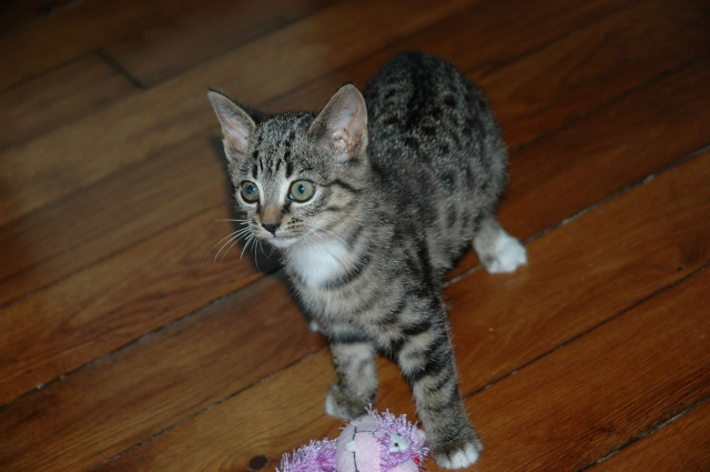 Spécials Photos : Avant/Après de nos chats Dsc_0026