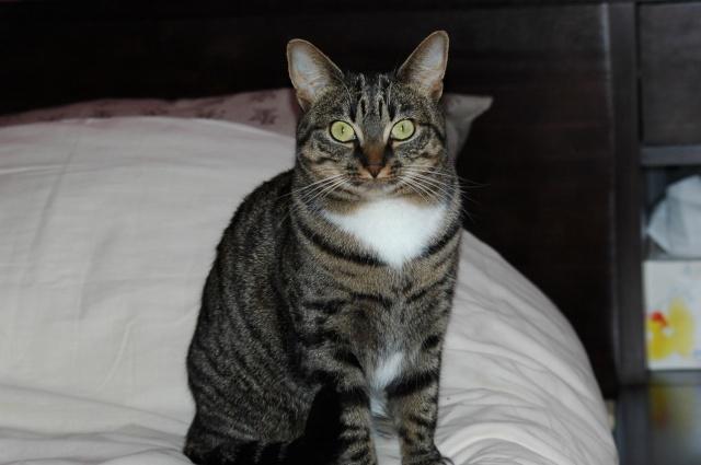Spécials Photos : Avant/Après de nos chats Dsc_0027