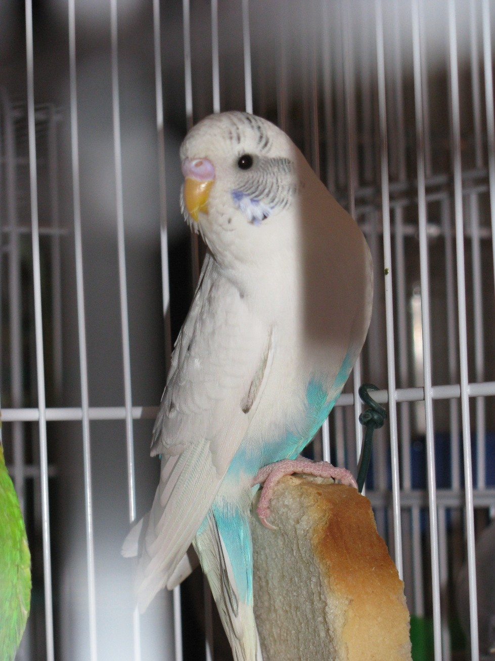 Azzurro opalino. Q2310