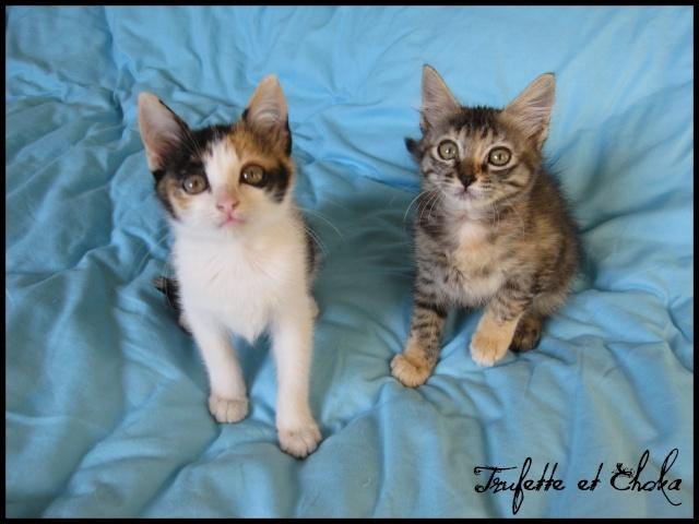 CHOKA et SAVANAH (Trufette) T01010