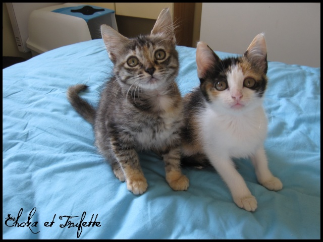CHOKA et SAVANAH (Trufette) T0510