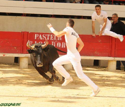 Super Royale de Fabre Mailhan  Lansargues  20-06-2010 Lansar22