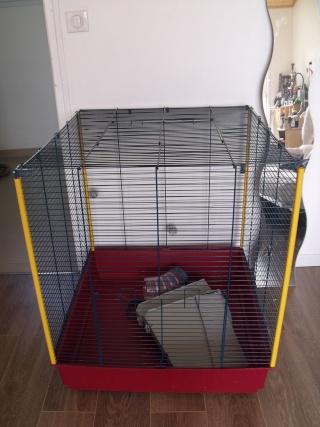 cage ferplast XL (44) Dscf7111