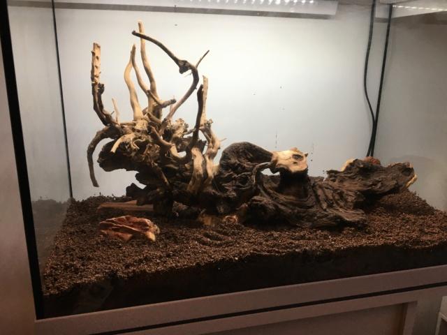 Lancement 1er aquarium d'un ado de 13 ans (Juwel Primo 70L) Img_4212