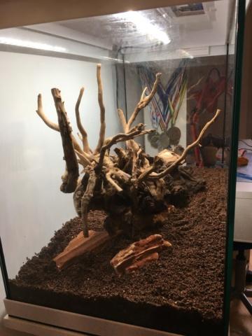 Lancement 1er aquarium d'un ado de 13 ans (Juwel Primo 70L) Img_4213