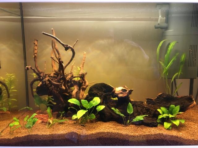 Lancement 1er aquarium d'un ado de 13 ans (Juwel Primo 70L) Img_4215