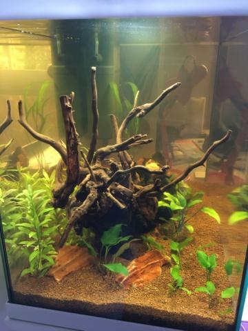 Lancement 1er aquarium d'un ado de 13 ans (Juwel Primo 70L) Img_4216