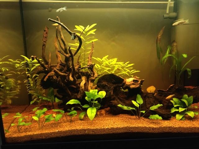 Lancement 1er aquarium d'un ado de 13 ans (Juwel Primo 70L) Img_4422