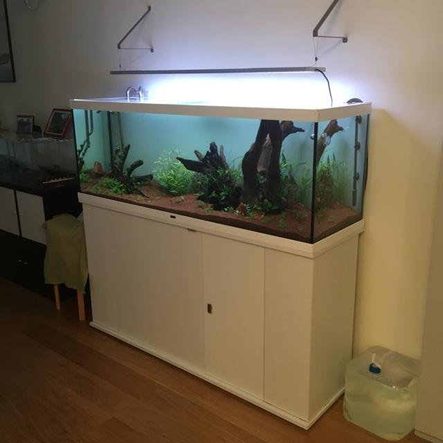 Choix aquarium : ça sera un juwel Rio 350  - Page 2 Img_4510