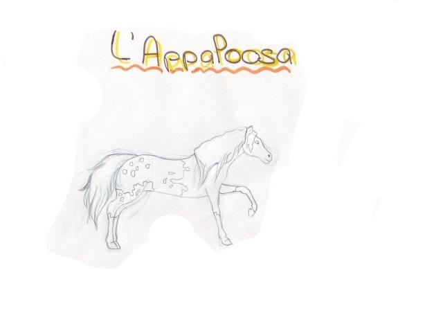 chevaux d'alexie Apaloo10