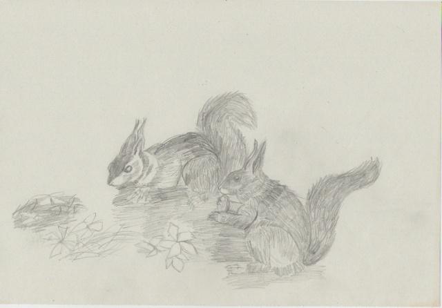 petits écureuils (rintintin5510) Acureu10