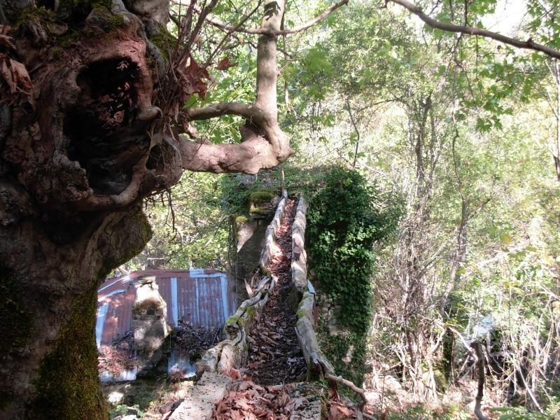 Νερόμυλος - περιοχή Αγίας Βαρβάρας Dscn0514