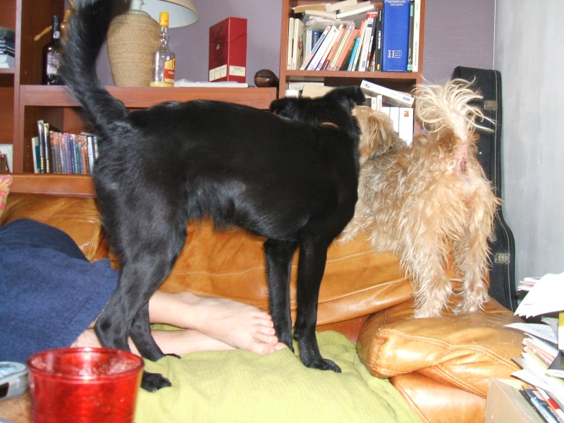 Eliott (Frisby), 8 mois, petit chien noir (45) Dscf0015