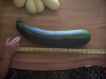 First harvest of 2010 - Zuchinni & Squash Pict0043