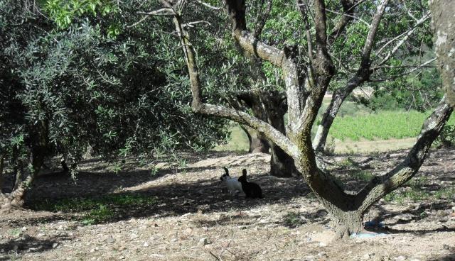 arbres au belles ecorces 03710