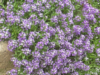 Nostalgie mes fleurs Desali10