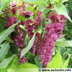 protection des plantes en periode hivernale Leyces10