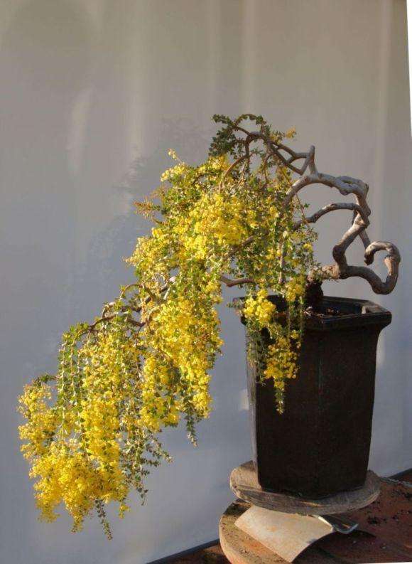 Bonsai Or Plant In Pot