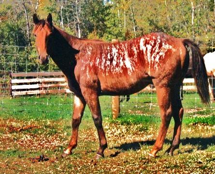 Toxic's Horses Joe_la10