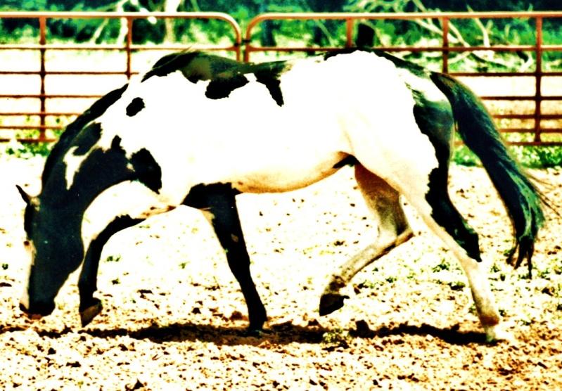 Toxic's Horses Sooner10