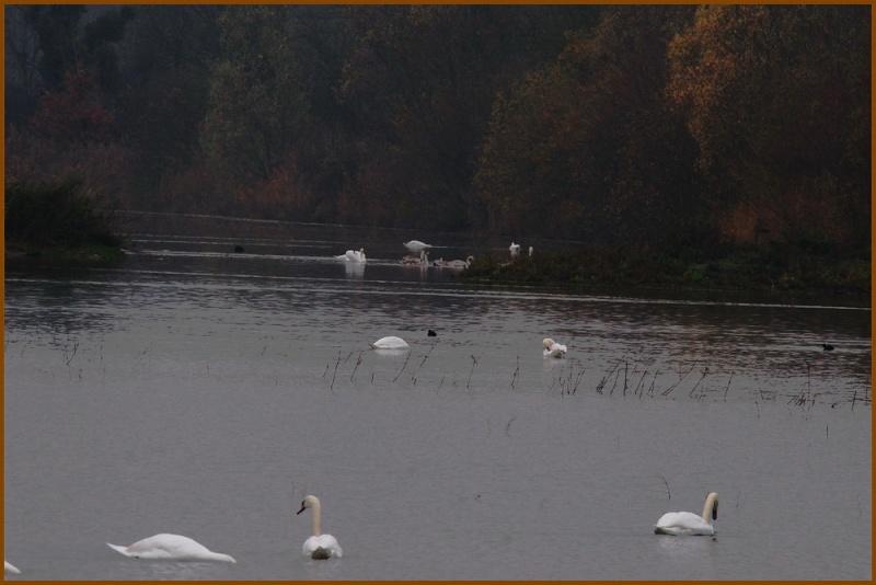 Le lac des Signes.... Le_lac10