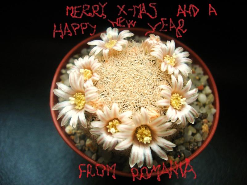 Christmas 2010 Cacti10