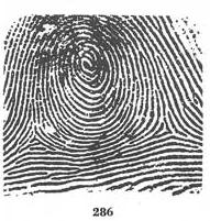 X - WALT DISNEY - One of his fingerprints shows an unusual characteristic! - Page 22 286_wh10