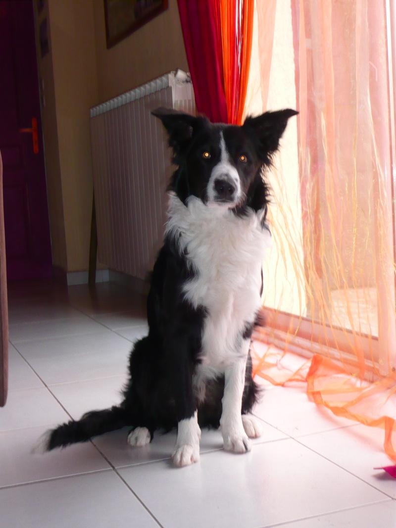 *** spécial *** photos de nos animaux *** Fox_0211