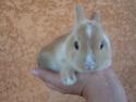 *** spécial *** photos de nos animaux *** Karame10