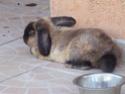 *** spécial *** photos de nos animaux *** Lapins10