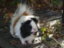 *** spécial *** photos de nos animaux *** P1000910