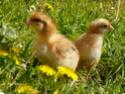 *** spécial *** photos de nos animaux *** P1010410