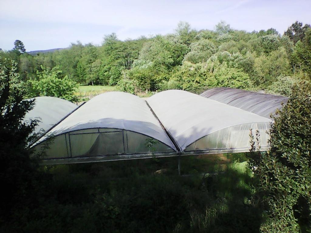 Forest Garden Photo010