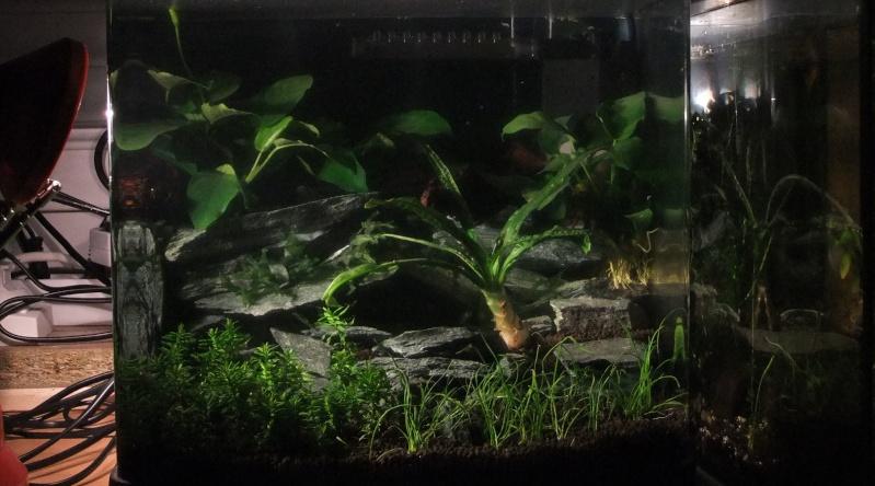 Mes aquariums : Dscf1410
