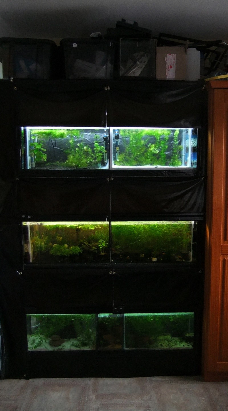 Ma mini-fishroom Dscf1411